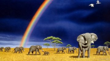 on rainbows, chaos, Prof Dawkins and the tail end of an elephant